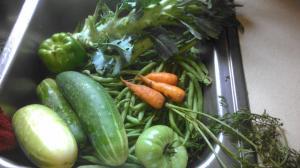 harvest-07-31-14